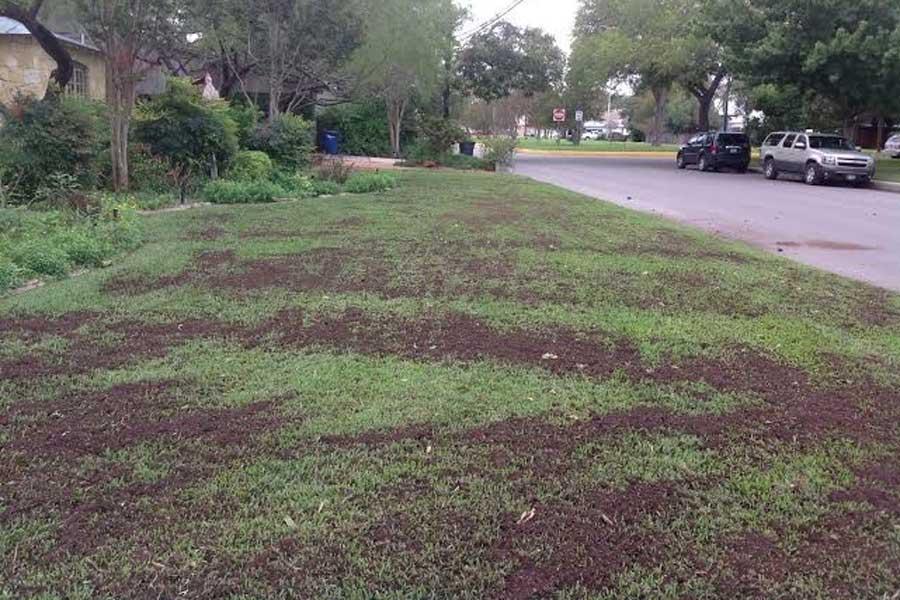 Lawn Repair Adelaide
