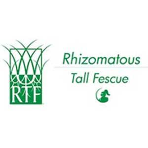 Rhizomatous Tall Fescue